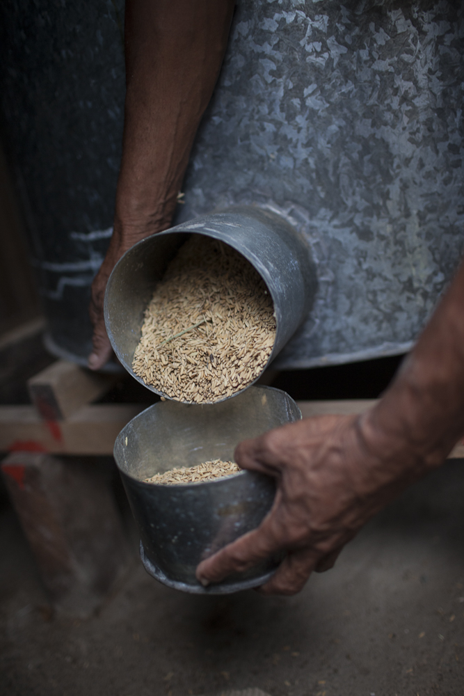 Alberto Da Costa shows part of his rice he harvest from the prev