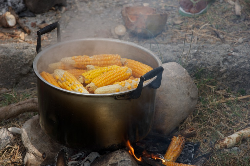 Sele maize is sweet and delicious when eaten soon after harvest © Unknown/Seeds of Life