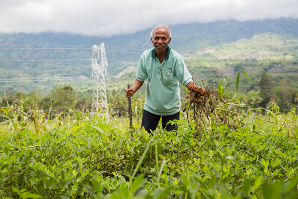 This farmer in Maliana, Bobonaro district, is happy to plant Utamua because the yield is good and the peanuts are big © Alexia Skok/Seeds of Life